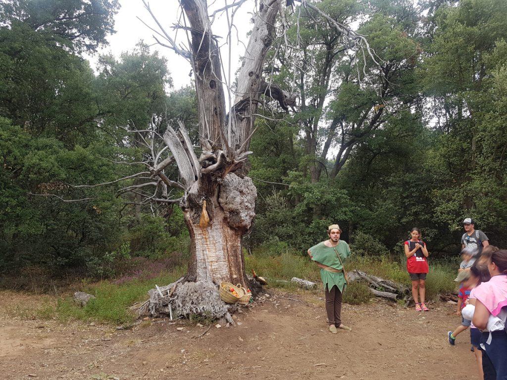 bosque-trasno