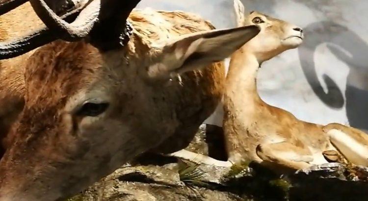 descubre-museo-fauna-salvaje-valdehuesa