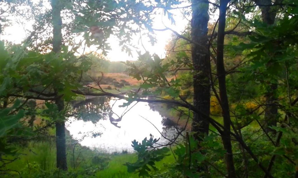 La-laguna-cernea
