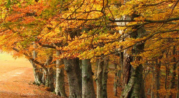 lugares-en-leon-otoño