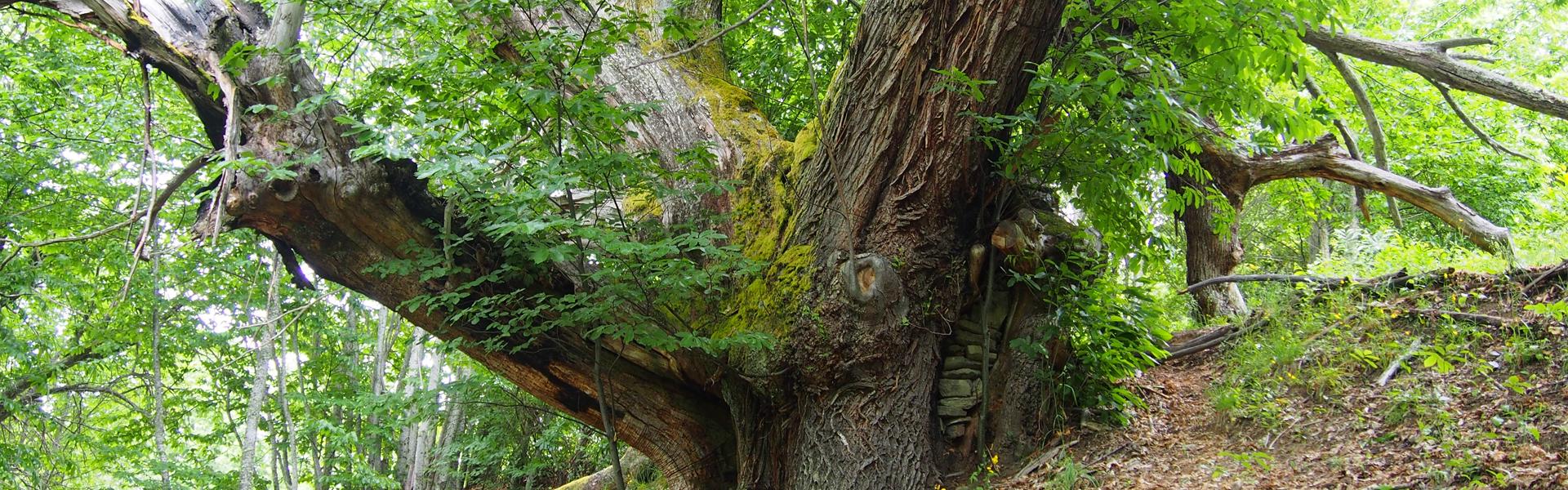 mejores-bosques-otono-leon