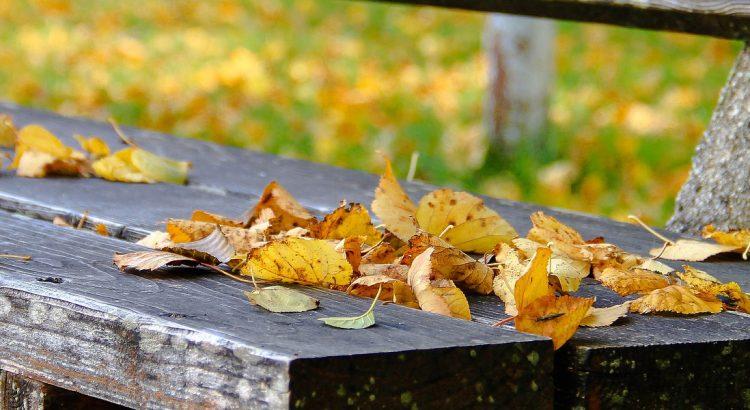 parques-de-leon-otoño