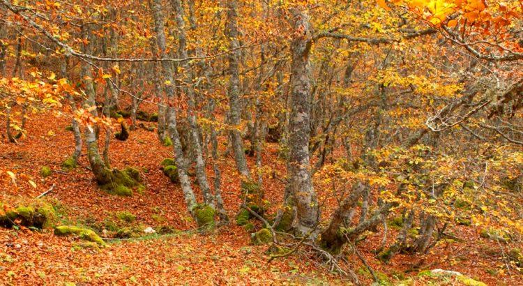 rutas-otoño-provincia-leon